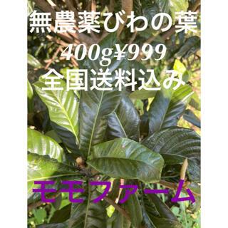 無農薬 びわの葉 400g(フルーツ)