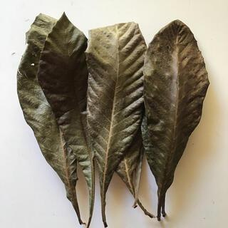 無農薬枇杷の葉25枚(健康茶)