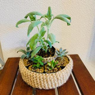 多肉植物&ホワイトセージ ハンドメイドポット(その他)