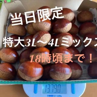 当日限定☆茨城県笠間産無農薬生栗 1kg+α(フルーツ)