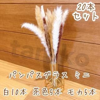 ミニ パンパスグラス ドライフラワー テールリード 白10本 茶色5本 モカ5本(ドライフラワー)