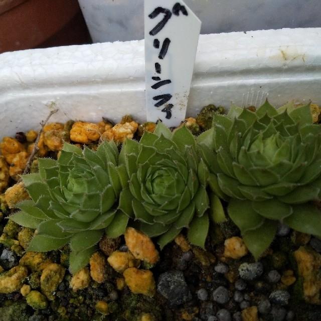 グリーンフィ ハンドメイドのフラワー/ガーデン(プランター)の商品写真