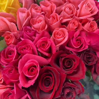 バラ切り花 Sサイズ 25本(その他)