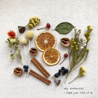 dry botanical /  #18 ドライフラワー 花材  ハンドメイド(ドライフラワー)