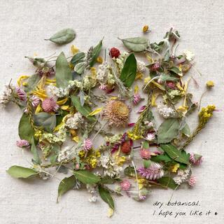 dry botanical /  #19 ドライフラワー 花材  ハンドメイド(ドライフラワー)