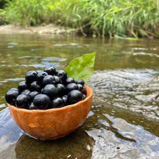 岡崎市産ブルーベリー(フルーツ)