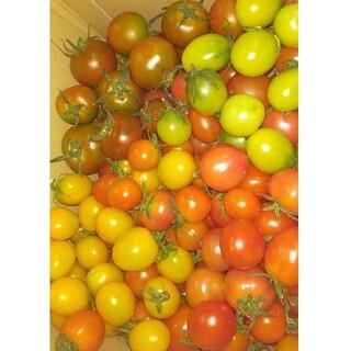 ありさ様専用『ミニトマトセット1.8キロ』(野菜)