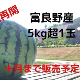 富良野産スイカ5kg超×1玉  家庭用 訳あり商品 ハネ品(フルーツ)