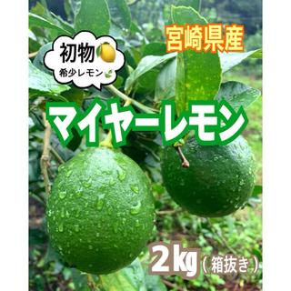 【宮崎県産】初物❣️マイヤーレモン2㎏(送料込み)/レモン グリーンレモン 果物(フルーツ)