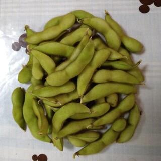北海道産 もぎたて枝豆 農家直送(野菜)