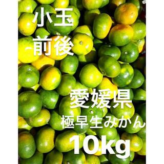 愛媛県産 極早生みかん 小玉前後 傷スレあり 10kg(フルーツ)