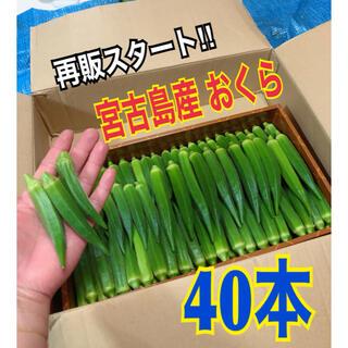 40本 宮古島産 おくら オクラ(野菜)