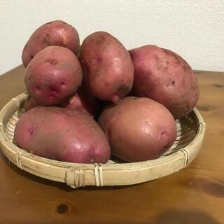 アンデスレッド1.8kg(野菜)
