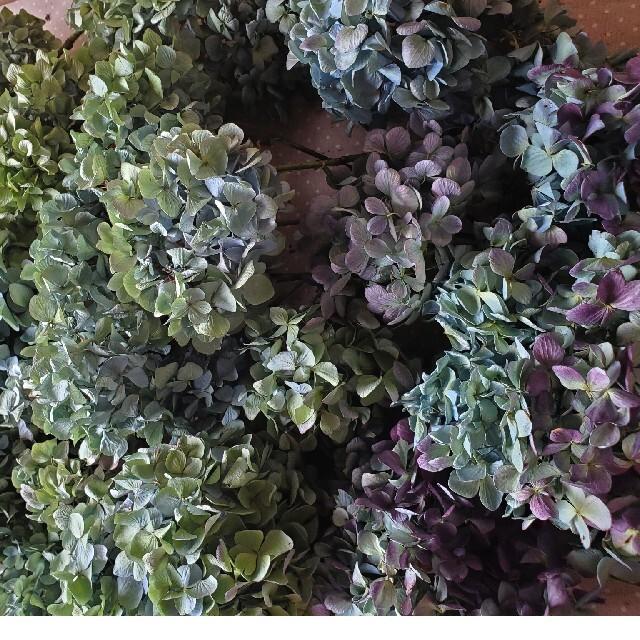 チョコ様ご専用♡秋色紫陽花ドライフラワー ハンドメイドのフラワー/ガーデン(ドライフラワー)の商品写真