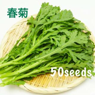 まき時! 春菊 ドドーンっと! 種50粒!(野菜)