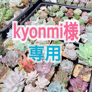 【kyonmi様 専用🍒】(その他)