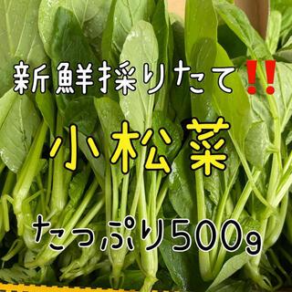 新鮮野菜直送便‼️採れたての小松菜をお召し上がり下さい❗️(野菜)