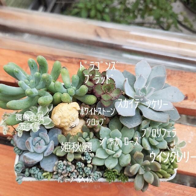 ⋆⋆⋆様専用☆ワンコのお昼寝✩.*˚×2セット ハンドメイドのフラワー/ガーデン(その他)の商品写真