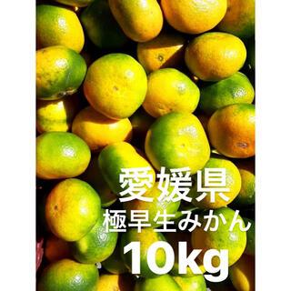 愛媛県産 極早生みかん 10kg(フルーツ)