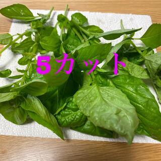 バジル 苗 5カット(野菜)