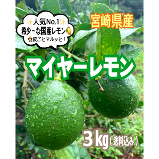 【宮崎県産】初物❣️マイヤーレモン3㎏(送料込み)/レモン グリーンレモン 果物(フルーツ)