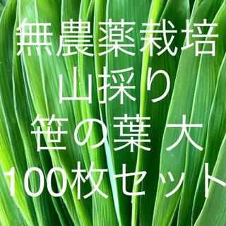 無農薬栽培 山採り 笹の葉 大サイズ 100枚セット(野菜)