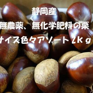 静岡産 無農薬 無化学肥料の大き目なサイズ アソート2㎏の生栗 D(フルーツ)