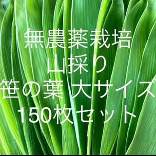 無農薬栽培 山採り 笹の葉 大サイズ 150枚セット(野菜)