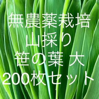 無農薬栽培 山採り 笹の葉 大サイズ 200枚セット(野菜)