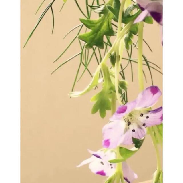 にゃんこちゃんだよ様用 可愛い ネモフィラ  の種 4種類 ハンドメイドのフラワー/ガーデン(プランター)の商品写真
