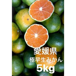 愛媛県産 極早生みかん 5kg(フルーツ)