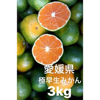 愛媛県産 極早生みかん 3kg(フルーツ)