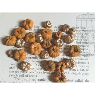 プッカポッド(木の実/素材)   かぼちゃ ハロウィン素材 ハーバリウム(各種パーツ)