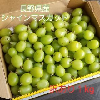長野県産 訳ありシャインマスカット 1kg ※9月18日収穫予定(フルーツ)