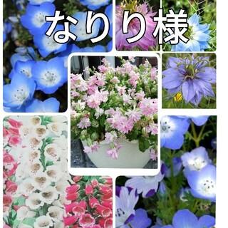 ♥️花の種 シレネピーチブロッサム ネモフィラ2種 ジキタリス ニゲラ オダマキ(プランター)