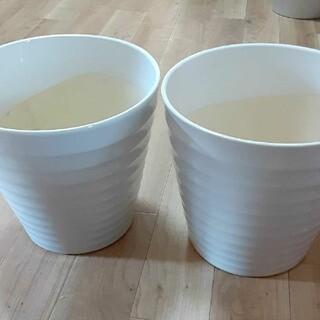 ❤️大輪・胡蝶蘭の鉢❤️大きいセット(その他)
