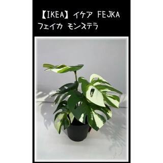 イケア(IKEA)の【IKEA】イケア FEJKA フェイカ モンステラ(置物)