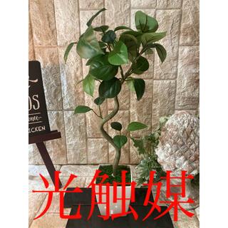 光触媒 人工観葉植物 ウォールグリーン 造花 インテリア ガジュマル44