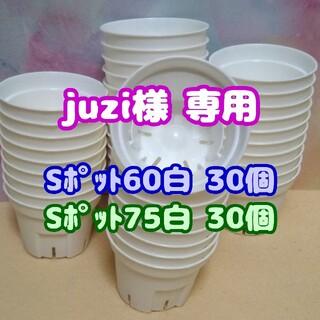 【スリット鉢】Sポット丸型75白30個2.5号7.5cmプレステラ多肉植物プラ鉢(プランター)