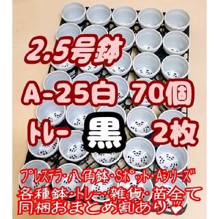 プラ鉢2.5号【A-25】70個+専用システムトレー黒2枚スリット鉢プレステラ多(プランター)