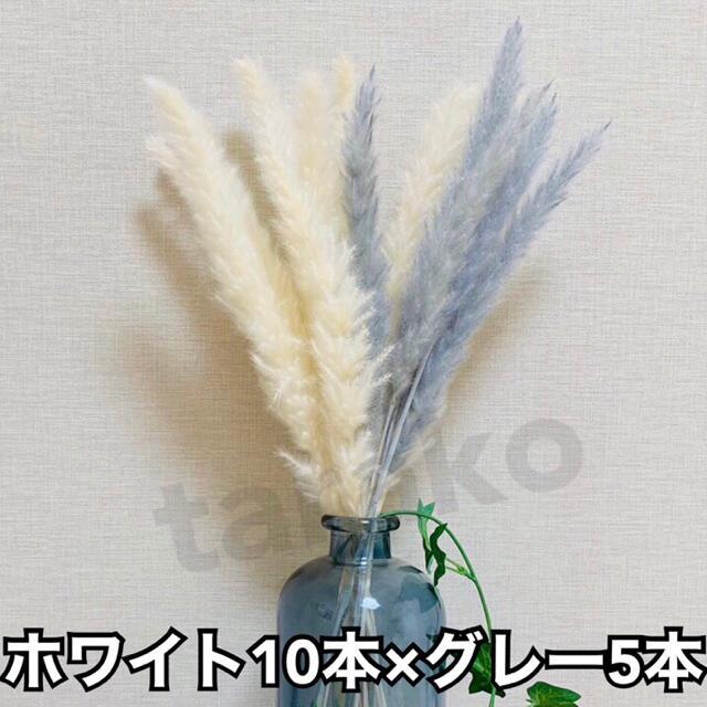 パンパスグラス 白9本 茶色3本 モカ3本 ミックス 15本 ドライフラワー ハンドメイドのフラワー/ガーデン(ドライフラワー)の商品写真