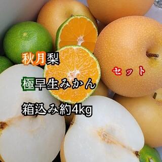 愛媛県産 秋月 梨 極早生みかんセット 箱込み約4kg 果物