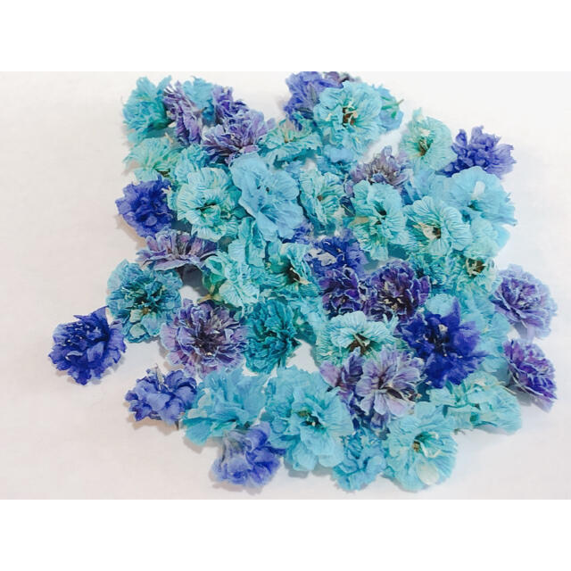 ブルー・パープル系 かすみ草 ドライフラワー 大粒 含む 50粒以上 ハンドメイドのフラワー/ガーデン(ドライフラワー)の商品写真