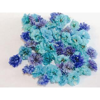 ブルー・パープル系 かすみ草 ドライフラワー 大粒 含む 50粒以上(ドライフラワー)