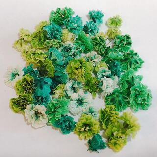 グリーン系 かすみ草 ドライフラワー 大粒 含む 50粒 以上(ドライフラワー)