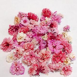 ピンク ホワイト系 かすみ草 ドライフラワー 大粒 含む50粒以上(ドライフラワー)