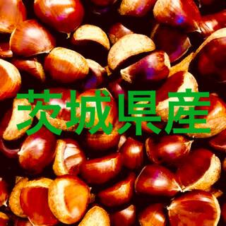茨城県産 栗 大粒サイズ 1.3キロ(野菜)