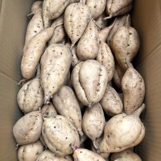 さつまいも 安納芋 こがね 5キロ(野菜)
