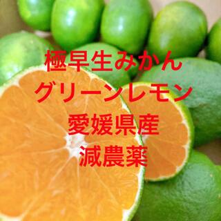 減農薬 グリーンレモン 極早生みかん