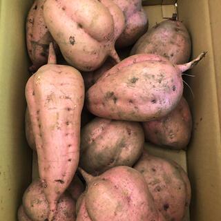 さつまいも 安納芋 加工用5キロ(野菜)